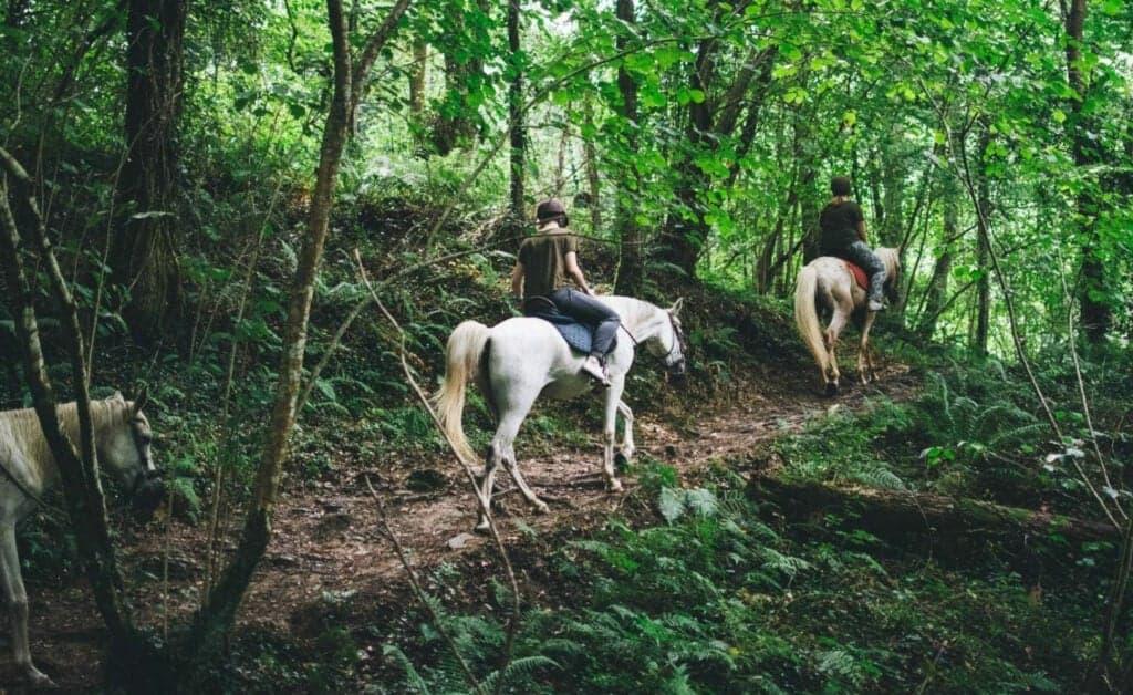 Spain Zarautz Surf Village horseback riding