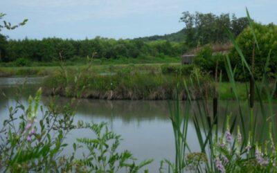 Sud Adour Region Mimizan