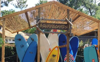 Surflife Family Surfboards